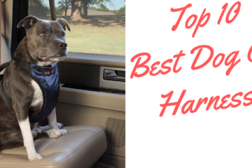 Dog Car Harnesses