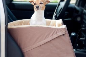 best dog car seat booster